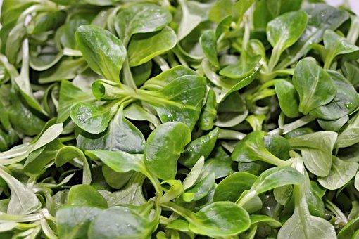 Lamb's Lettuce, Salad, Leaves, Lettuce Leaves, Eat