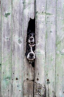Wood, Wallpaper, Dogs, Green, Field, Border Collie