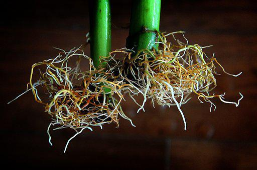 Flower, Hydroponic Cultivation, Root, Winter To