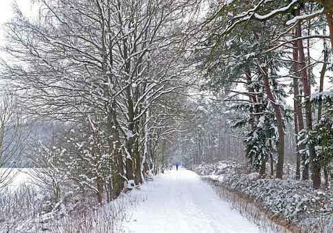 Winter Blast, New Zealand, Forest Area, Forest Path