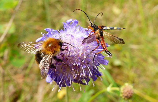 Nature, Insect, Flower, Apiformes, Summer, Pollination