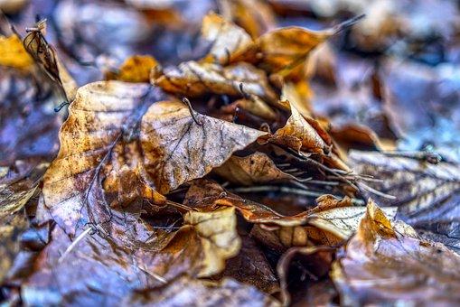 Leaves, Close, Macro, Autumn, Nature, Leaf, Season