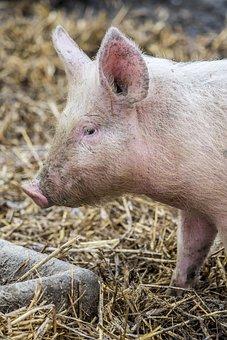 Mammal, Animal, Nature, Livestock, Agro-industry