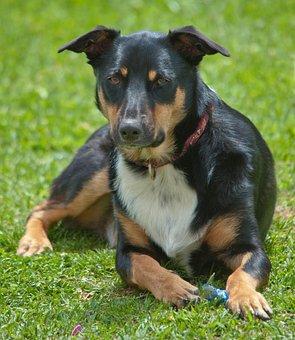 Dog, Canine, Pet, Cute, Mammal, Animal, Sit, Looking