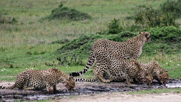 Wildlife, Mammal, Nature, Wild, Animal