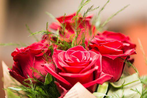 Flower, Rose, Nature, Gift, Bouquet, Valentine's Day