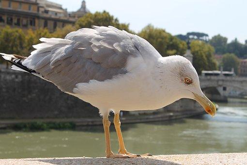 Bird, Nature, Waters, Wing, Animal, Rome