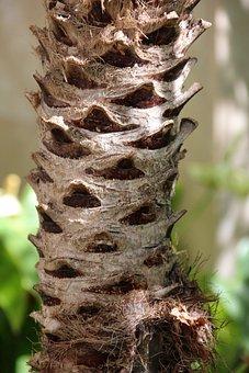 Palm, Tribe, Nature, Plant, Tree