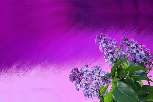 Spring, Lilac, Nature, Lilac Branch, Violet, Purple