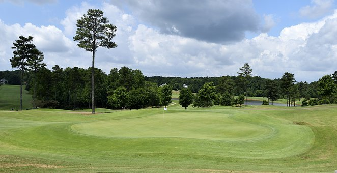 Tree, Grass, Nature, Landscape, Panoramic, Summer, Golf