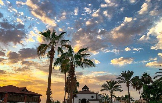 Arecaceae, Beach, The Tropical, Tree, Treatment, Nature