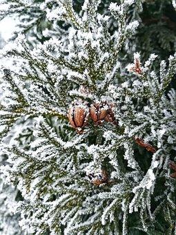 Winter, Tree, Christmas, Leann, Season