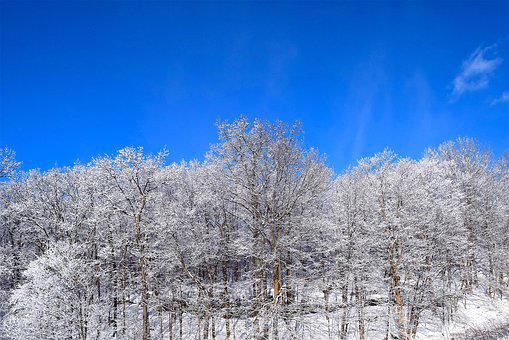 Snow, Trees, Winter, Frost, Cold, Morning, Nature