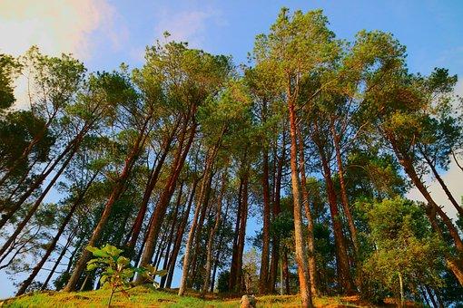 Tree, Nature, Wood, Landscape, Summer, Flora, Beautiful