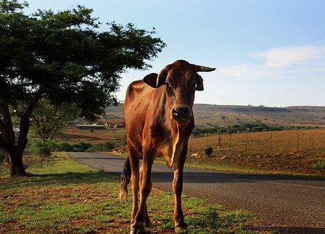 Mammal, Agriculture, Farm, Animal, Field, Africa