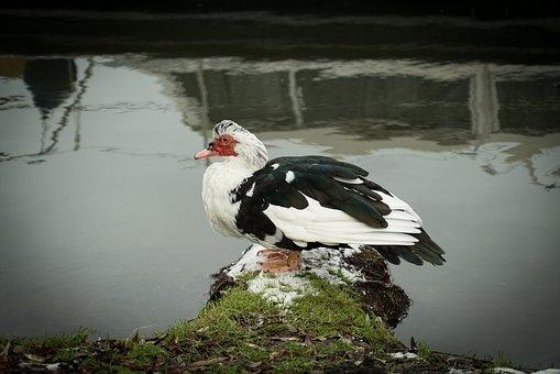 Bird, Nature, Water, Outdoors, Wildlife, Lake, Animal