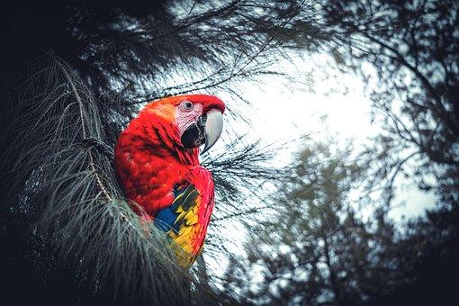 Birds, Nature, Pen, Outdoors, Animalia, Winter, Vivid