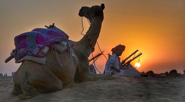 Rajasthan, Camel, Safari, Trekking, Evening, Dusk