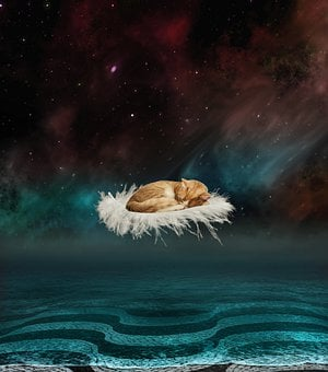 Fantasy, Water, Cat, Starry Sky, Paving Stones, Feather
