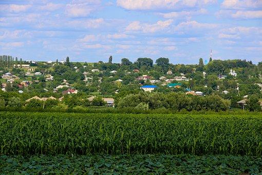 Field, Nature, Tree, Landscape, Green, Cucumber, House