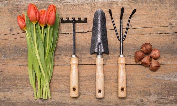 Garden, Gardening, Flower Planting, Flower, Plant