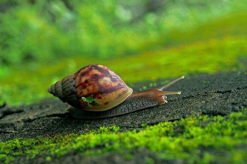 Nature, Snail, Slow, Garden, Gastropod