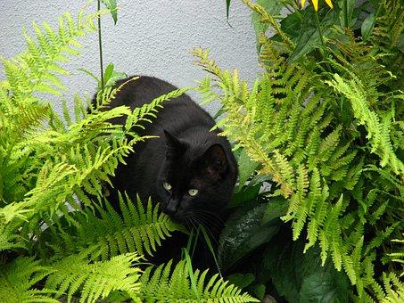 Black Cat, Precious Cat, Panther, Beautiful, Grünäugig