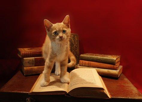 Domestic, Cat, Little, Cute, Kitten, Ginger, Books, Red