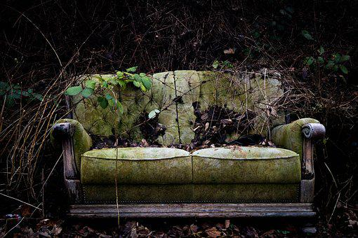 Wood, Nature, Old, Plant, Sofa, Leave, Overgrown