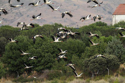 Spain, Madrid, Manzanares, Migrating, Storks