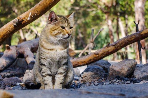 Nature, Animals, Living Nature, Mammals, Outdoors, Wild
