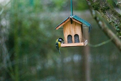 Bird, Nest Box, Nest, Nature, Fauna, Tit, Blue