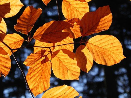 Autumn, Book Industry, Leaves, Nature, Season, Branch
