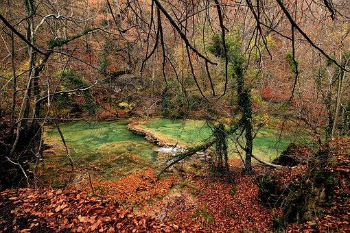 Nature, Tree, Wood, Autumn, Landscape, Leaf, Season