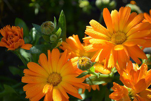 Flower, Plant, Natural, Summer, Petal, Have, Blooming