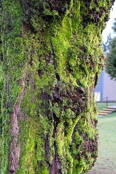 Nature, Flora, Tree, Leaf, Wood, Growth, Landscape