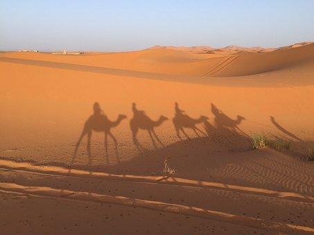 Desert, Sand, Camel, Landscape, Trip, Sunset