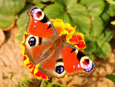 Nature, Butterfly Day, Animals, Insect, Garden