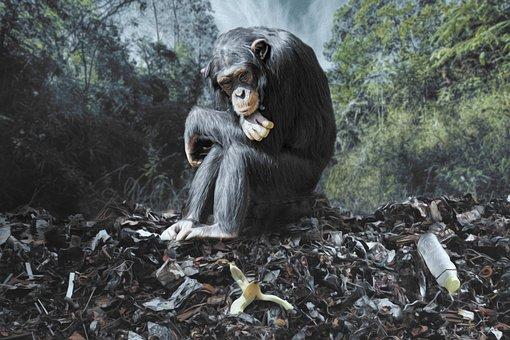 Monkey, Garbage, Environment, Nature, Trees, Banana