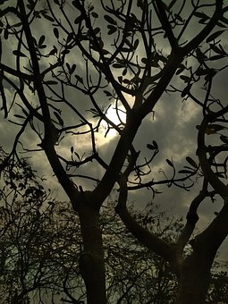 Tree, Branch, Nature, Wood, Silhouette