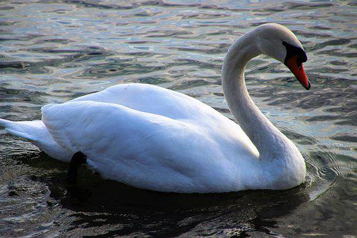 Water, Lake, Birds, Close Up, The Water, Morning