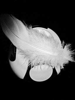 Feather, Bird Feather, Down Feather, White, Fluffy