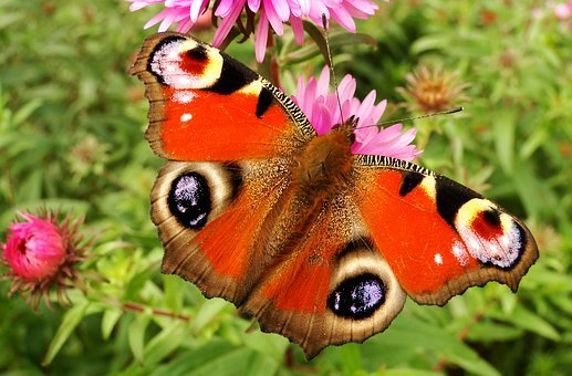 Nature, Butterfly Day, Summer, Insect, Garden, Animals