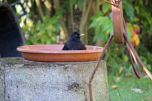 Nature, Wood, Garden, Bird, Tree, Blackbird, Bird Bath