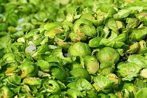 Eating, Plant, Brussels Sprout, Food