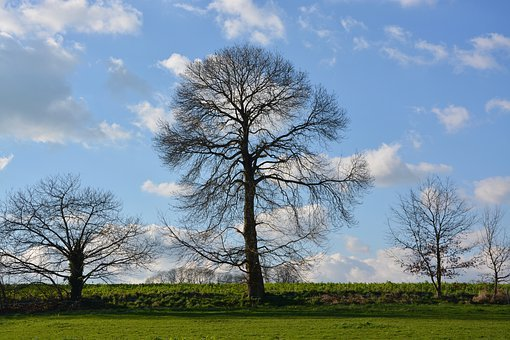 Tree, Bare Tree, Tree Without Leaves, Season Yesterday