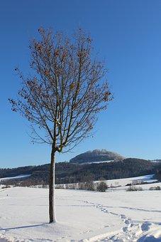 Winter, Snow, Tree, Nature, Cold, Hohenstaufen