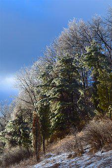 Ice, Trees, Nature, Landscape, Season, Snow, Winter