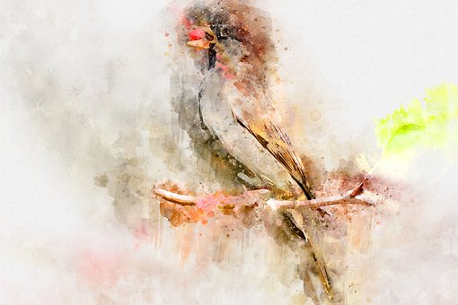 Bird, Watercolor, Exotic, Tree, Colorful, Tropical