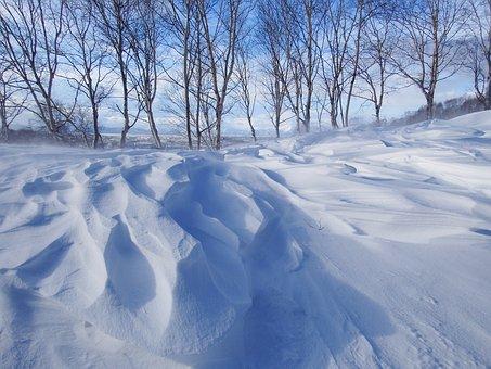 Winter, Snow, Cold, Leann, Wind, Frost, Frozen